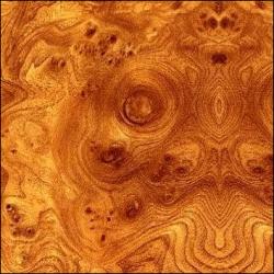 Стеновая панель корень вяза глянец 6 мм 5 категория