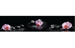 Орхидеи на камнях AF-30